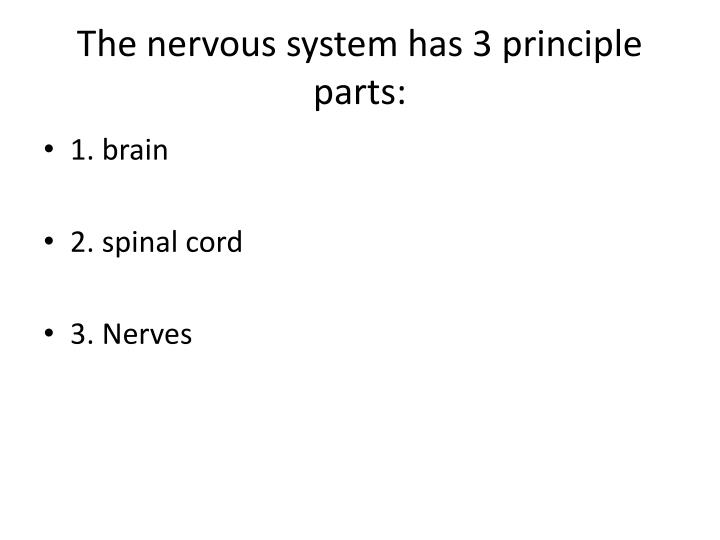 The nervous system has 3 principle parts: