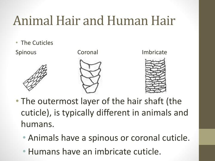 Animal Hair and Human Hair