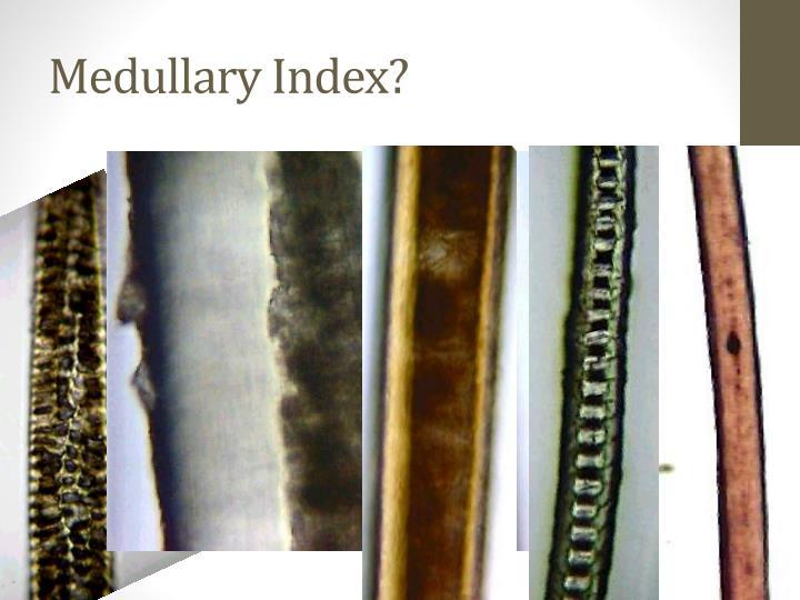 Medullary Index?