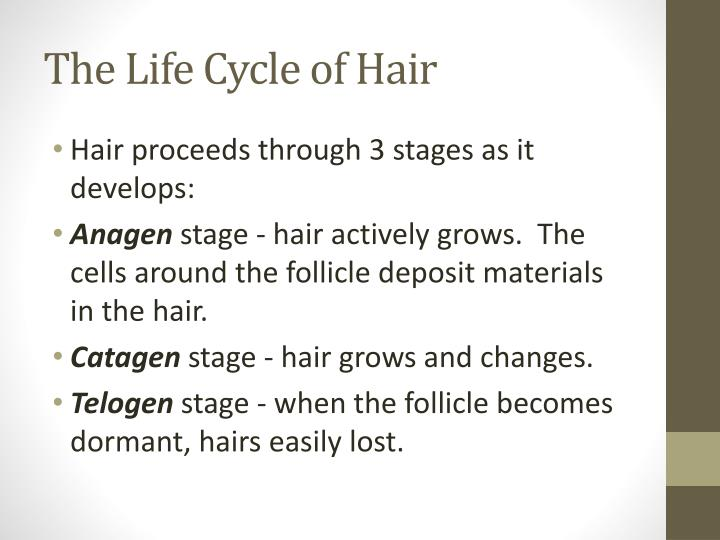 The Life Cycle of Hair
