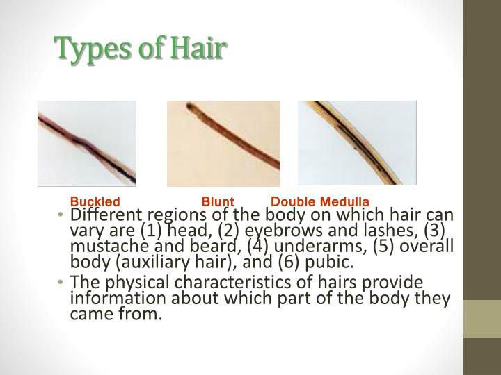 Types of Hair