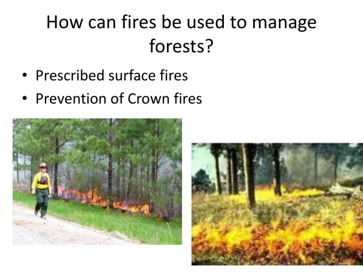 How can fires be used to manage forests?