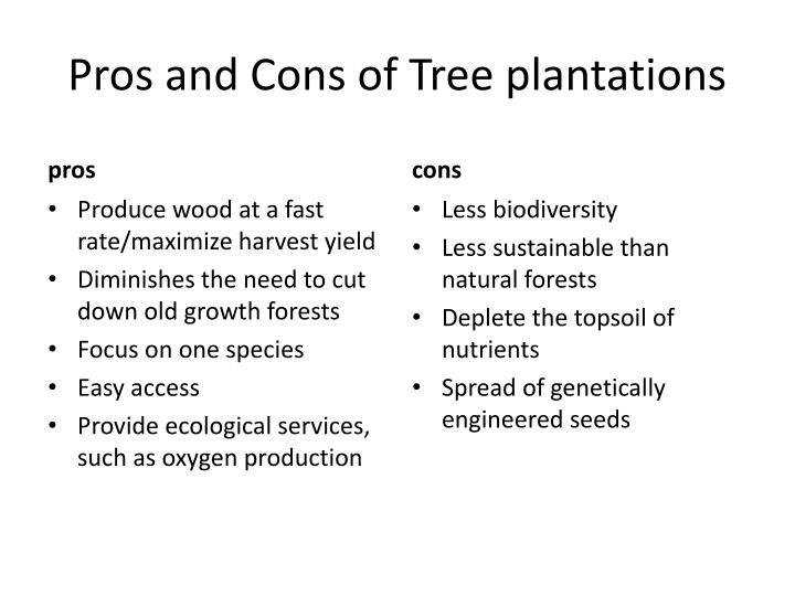 Pros and Cons of Tree plantations