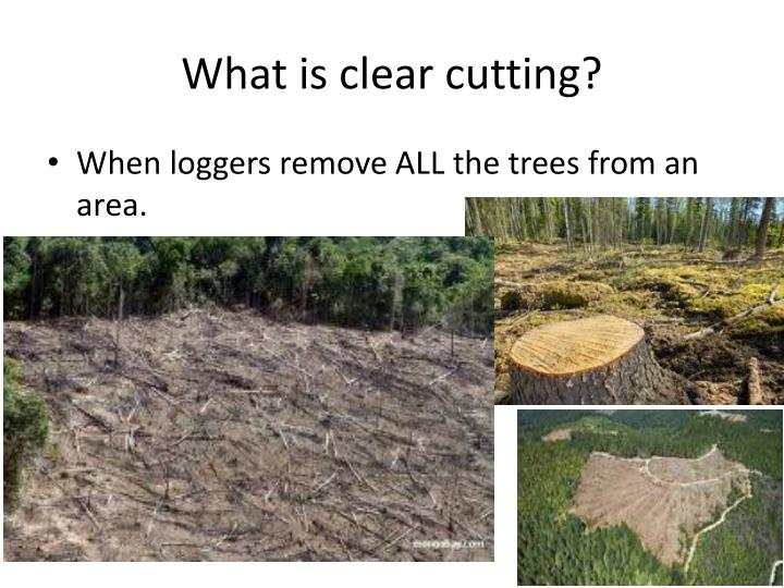 What is clear cutting?