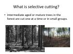 what is selective cutting