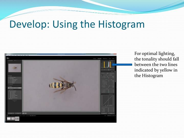 Develop: Using the Histogram