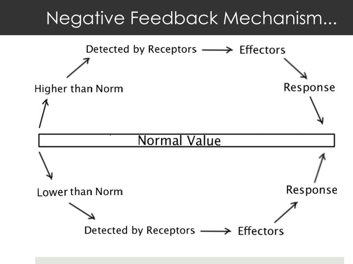 Negative Feedback Mechanism...