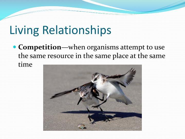 Living Relationships