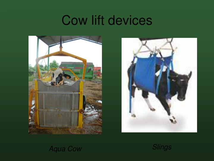 Cow lift devices