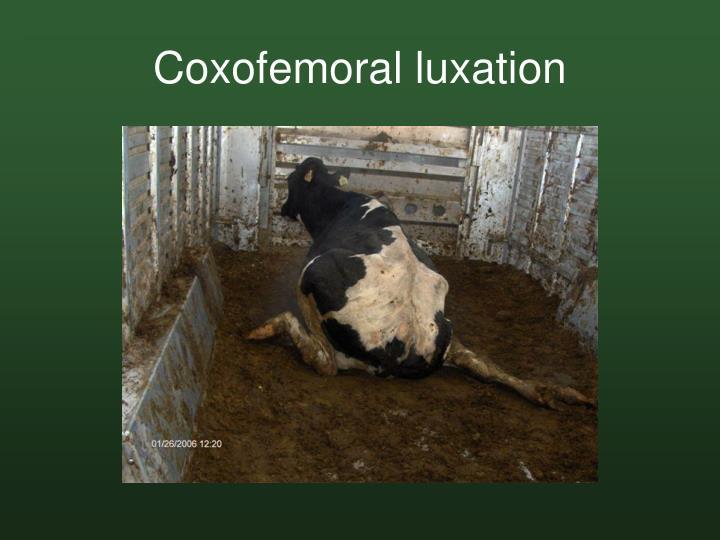 Coxofemoral