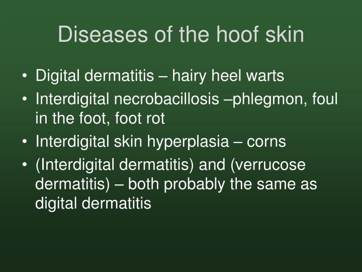 Diseases of the hoof skin
