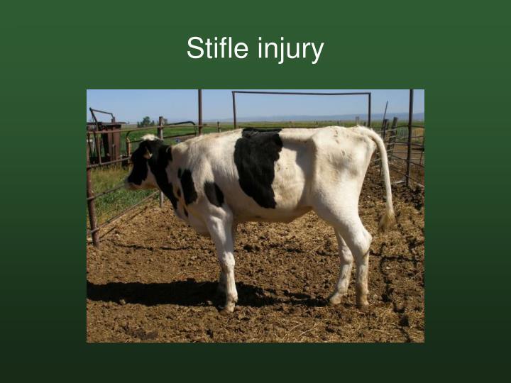 Stifle injury