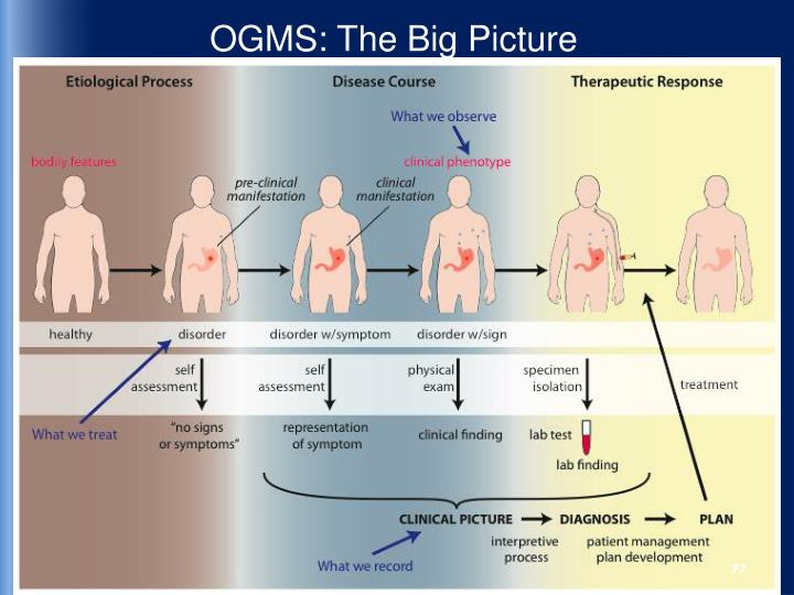 OGMS: The Big Picture