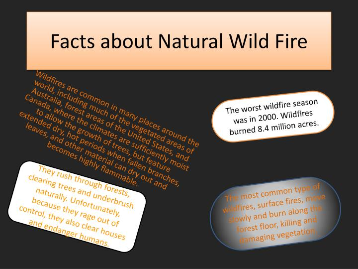 Facts about natural wild fire