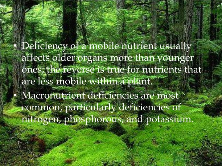 Deficiency of a mobile nutrient usually affects older organs more than younger ones; the reverse is true for nutrients that are less mobile within a plant.