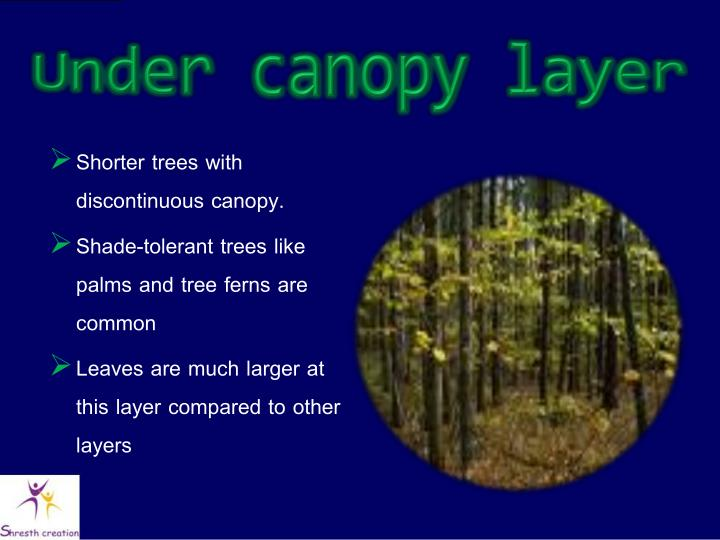 Under canopy layer