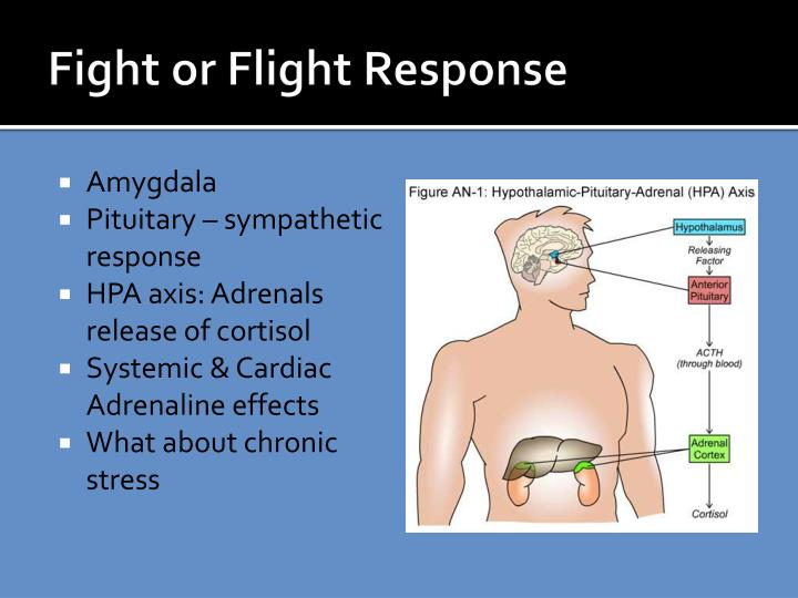 Fight or Flight Response