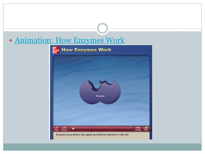 Animation: How Enzymes Work