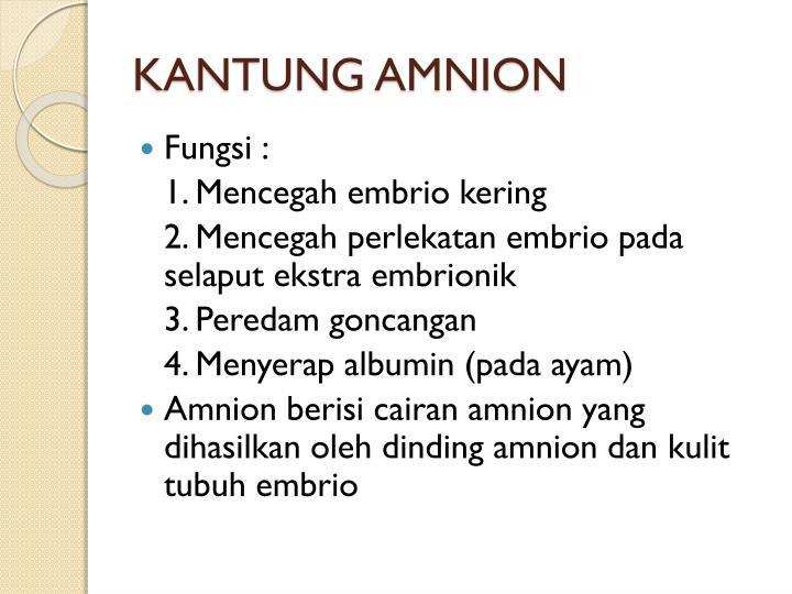 KANTUNG AMNION