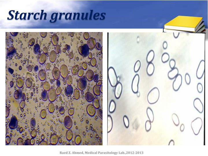 Starch granules