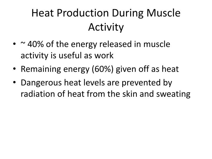 Heat Production During Muscle Activity
