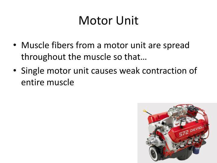 Motor Unit