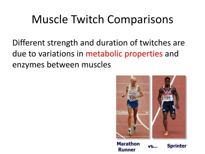 Muscle Twitch Comparisons