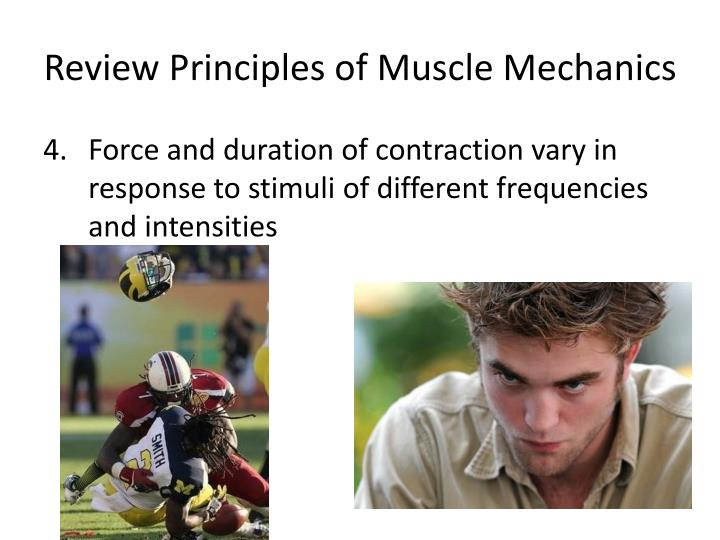 Review Principles of Muscle Mechanics