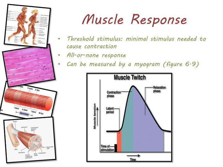 Muscle Response