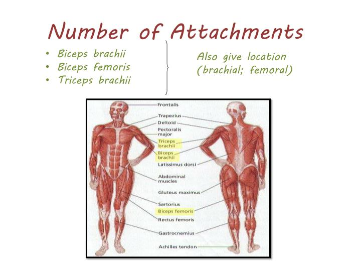 Number of Attachments