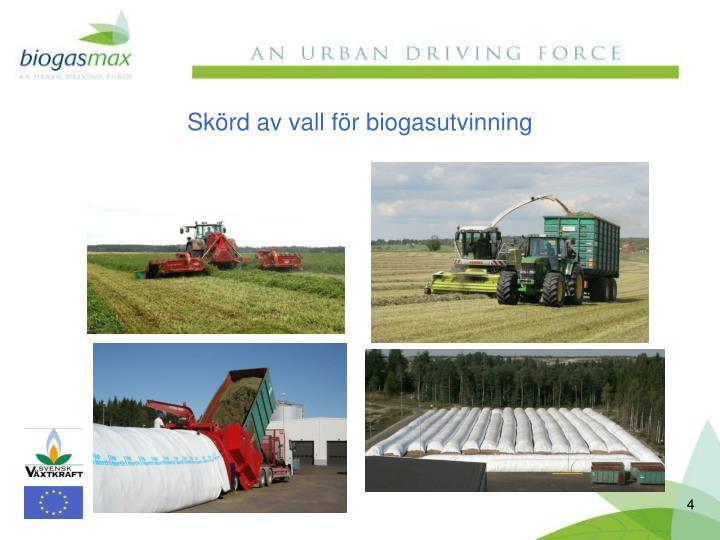 Skörd av vall för biogasutvinning