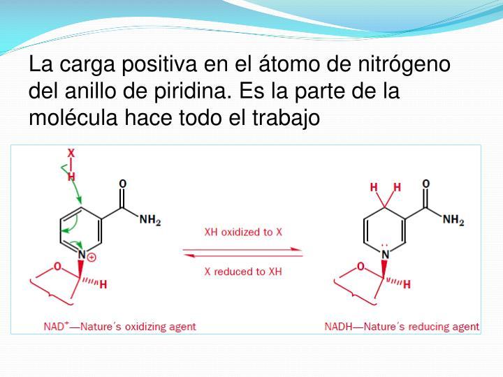 La carga positiva en el átomo de nitrógeno del anillo de piridina. Es la parte de la molécula hace todo el trabajo