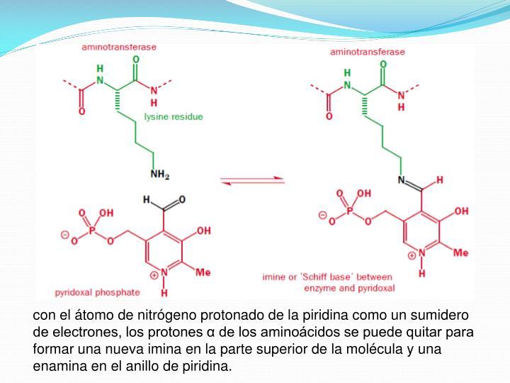 con el átomo de nitrógeno