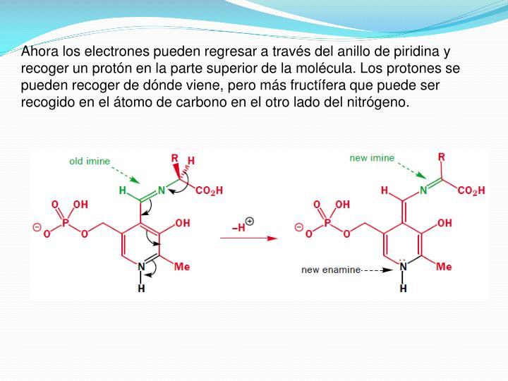Ahora los electrones pueden regresar a través del anillo de piridina y recoger un protón en la parte superior de la molécula. Los protones se pueden recoger de dónde viene, pero más fructífera que puede ser recogido en el átomo de carbono en el otro lado del nitrógeno.
