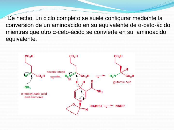De hecho, un ciclo completo se suele configurar mediante la conversión de un aminoácido en su equivalente de α-