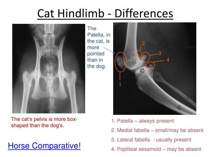 Cat Hindlimb - Differences
