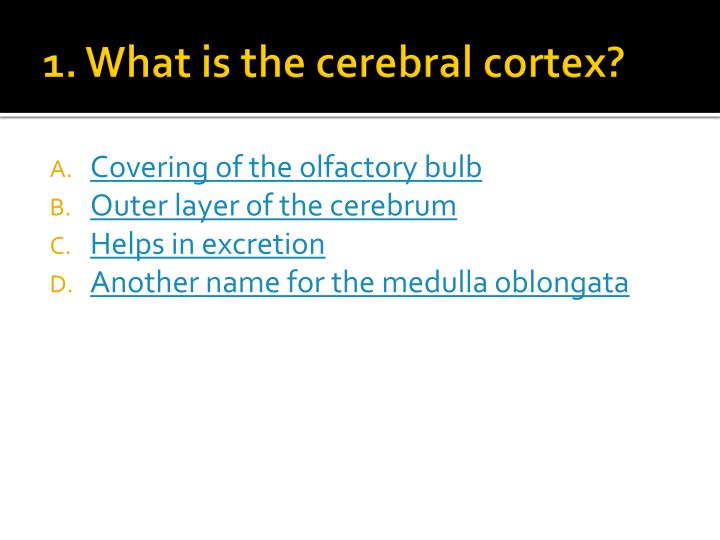1. What is the cerebral cortex?
