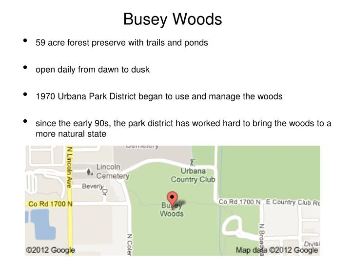 Busey Woods
