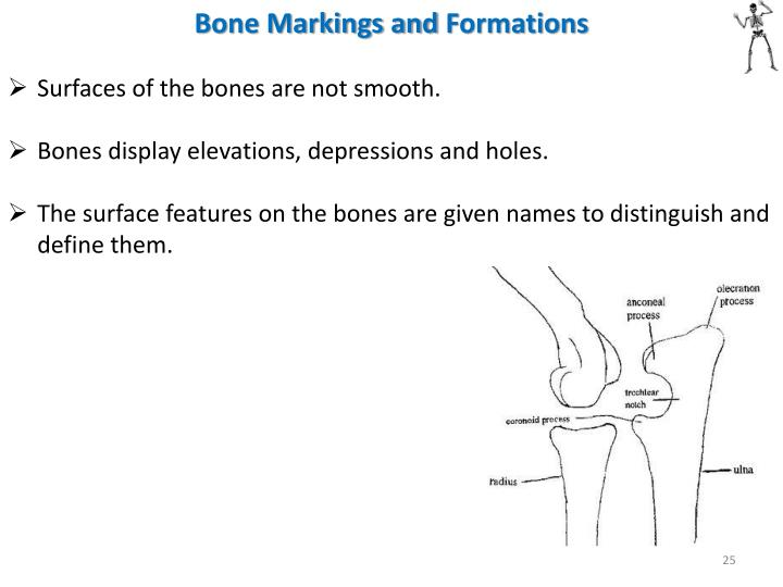 Bone Markings and