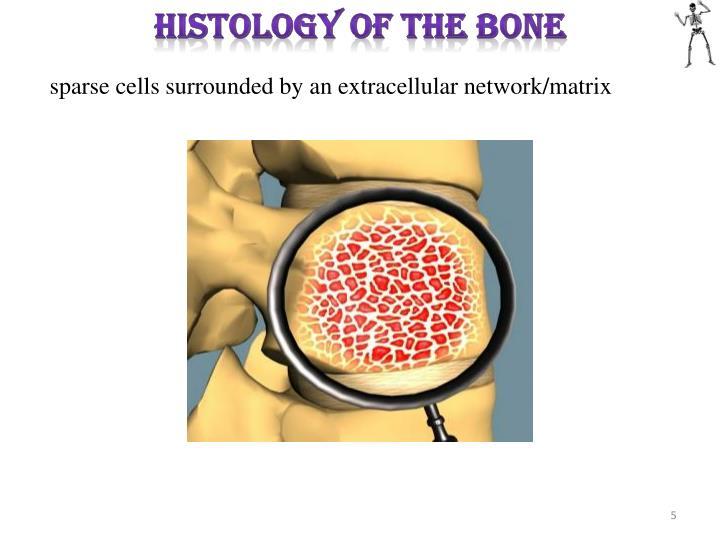 HISTOLOGY OF THE BONE