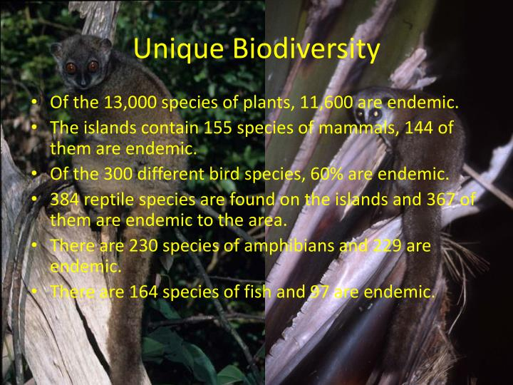 "madagascar and the indian-ocean islands biodiversity hotspot essay Biodiversity hotspots, despite some criticism, have become a tool for setting  conservation  madagascar and indian ocean islands, madagascar and indian  ocean  in a 2003 essay entitled ""conserving biodiversity coldspots"",  conservation."