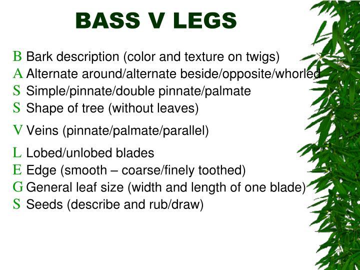 BASS V LEGS