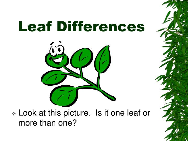 Leaf Differences