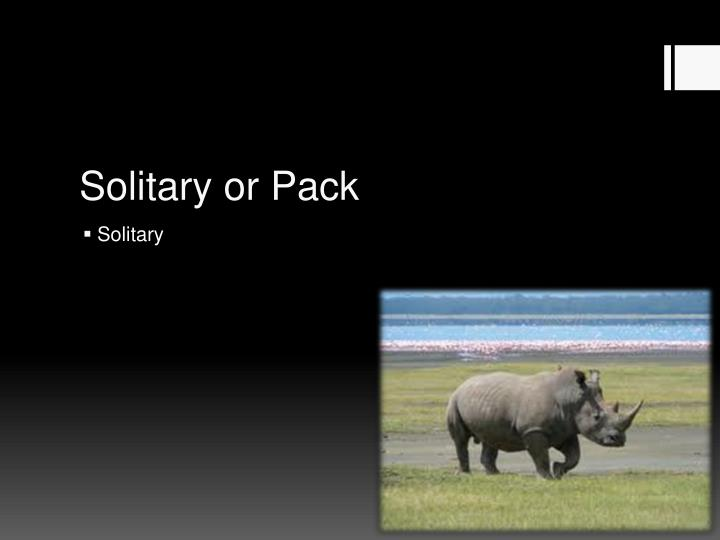 Solitary or Pack