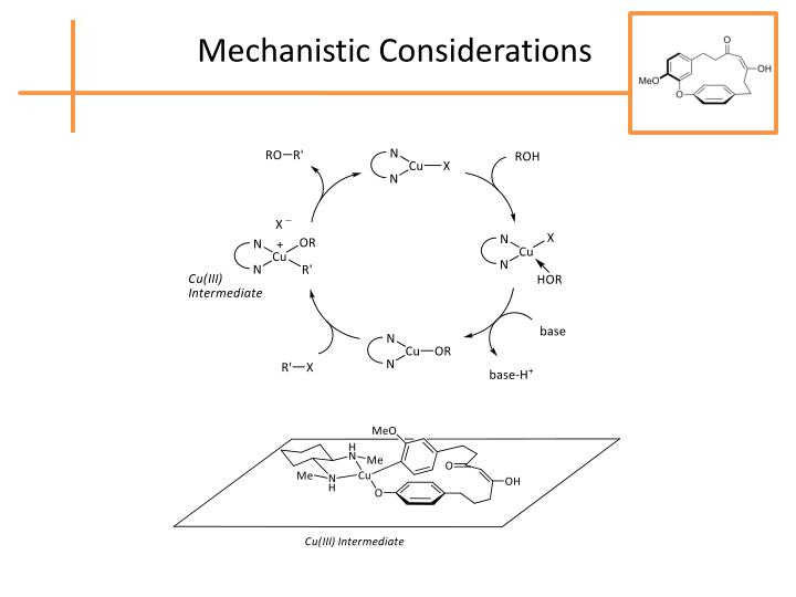 Mechanistic Considerations