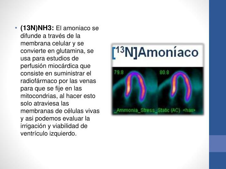(13N)NH3: