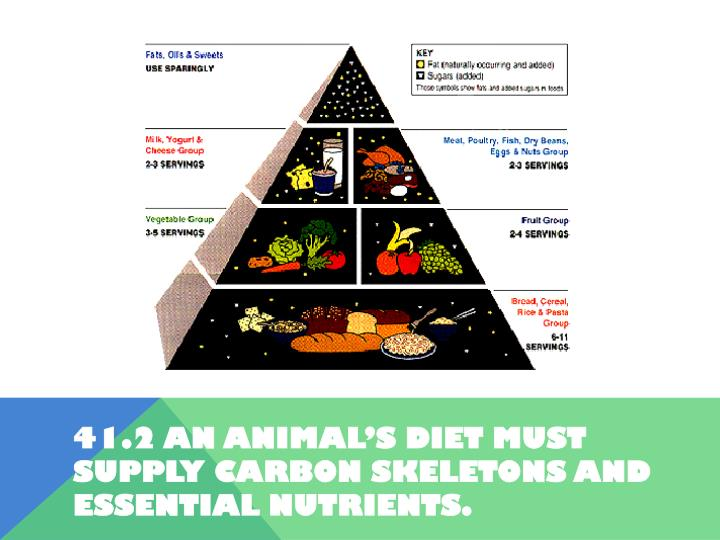 41.2 An animal's diet must supply carbon skeletons and essential nutrients.