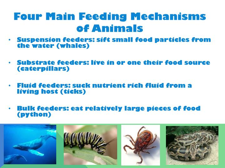 Four Main Feeding Mechanisms of Animals