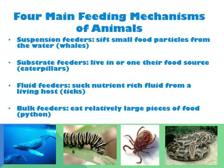 Four Main Feeding Mechanisms of Animals