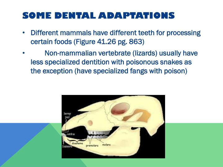 Some dental adaptations